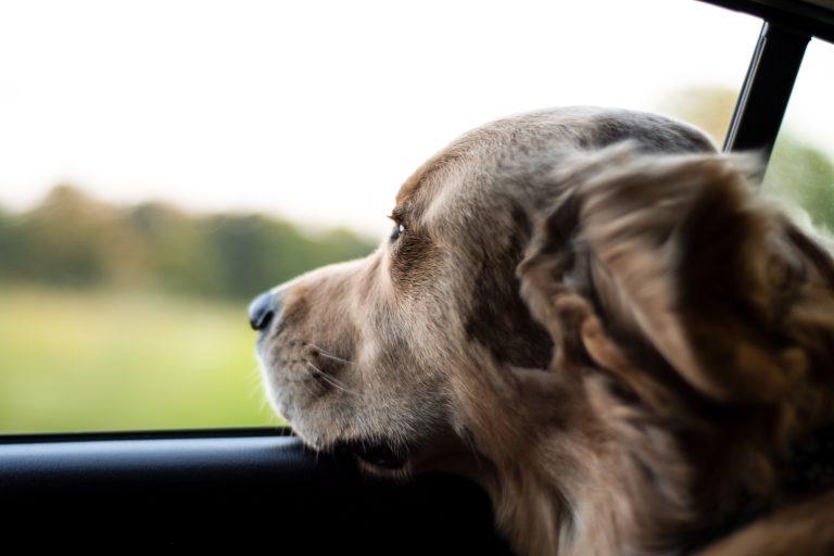 Direct geld lenen op je rekening - hond in de auto
